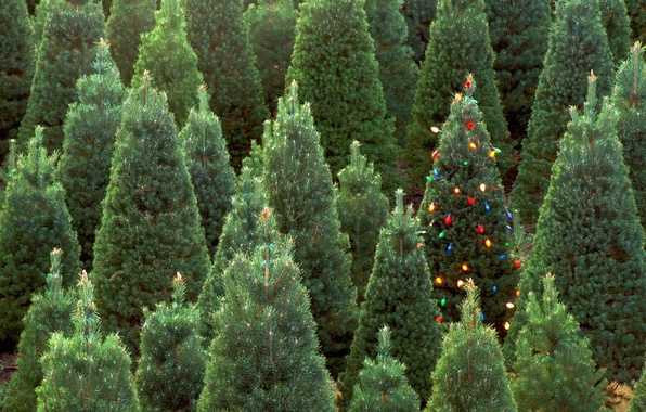 Picture forest, decoration, lights, green, tree, new year