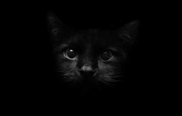 Picture eyes, cat, look, darkness, style