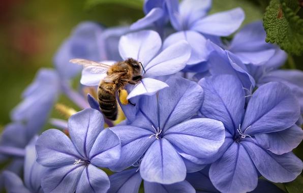 Picture macro, flowers, focus, Bee, petals, lilac