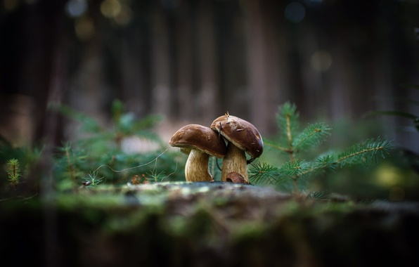 Picture nature, background, mushrooms
