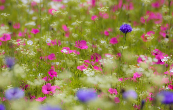 Picture flowers, Field, petals, blur, pink, white, lilac