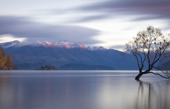 Picture mountains, lake, tree, New Zealand, panorama, New Zealand, water surface, Lake Wanaka, lake Wanaka, Lone …