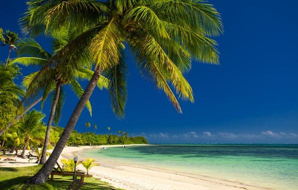 Picture sea, palm trees, coast, boats, sea, coast, palm trees, boats