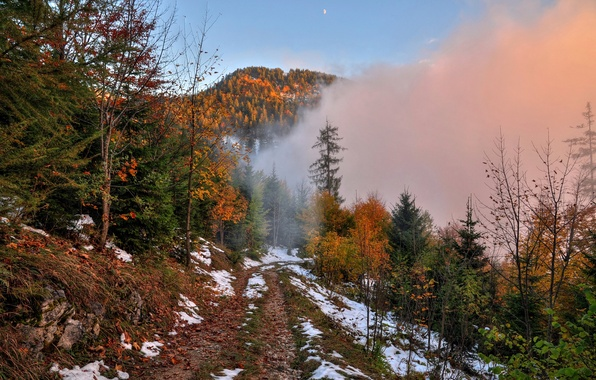 Picture road, autumn, forest, the sky, snow, trees, mountains, fog, the moon