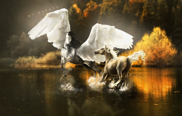 Picture water, trees, squirt, reflection, fiction, wings, horse, art, Pegasus