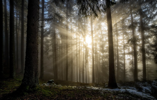Picture forest, the sun, rays, light, nature