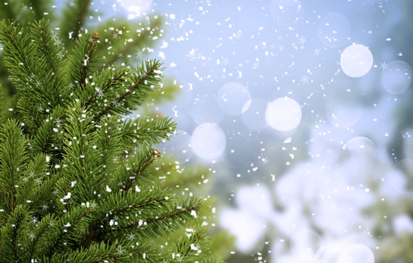 Picture cold, winter, greens, trees, snowflakes, branches, spruce, ate, tree, bokeh