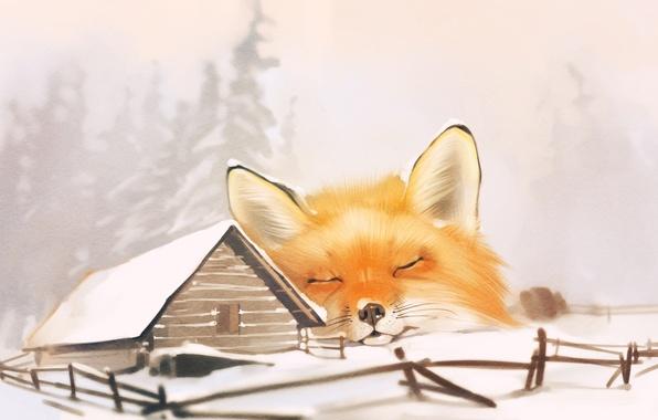 Picture house, Fox, fox, winter