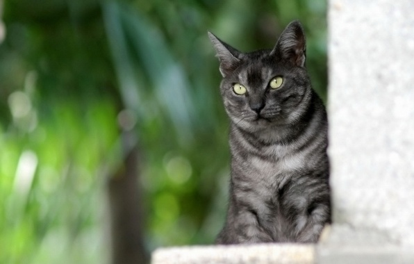 Picture cat, grey, sitting, striped, green background