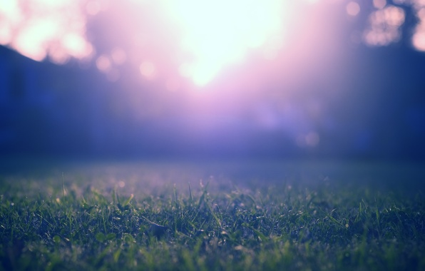 Picture purple, grass, macro, rays, light, trees, blue, nature, green, glare, lawn, color, lawn
