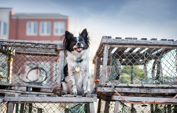 Picture house, background, dog