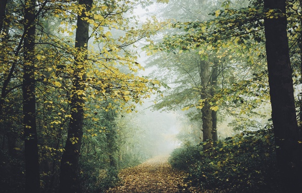 Picture autumn, forest, nature, trail, track
