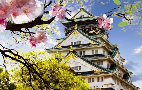 Picture castle, Japan, Sakura, flowering, Japanese, castle, japanese