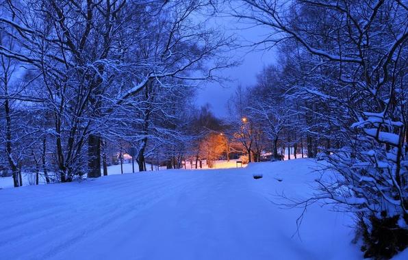Picture winter, road, light, snow, trees, night, lights, the evening, lantern