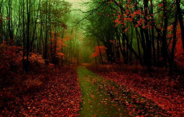 Picture road, autumn, forest, leaves, nature, fog, photo
