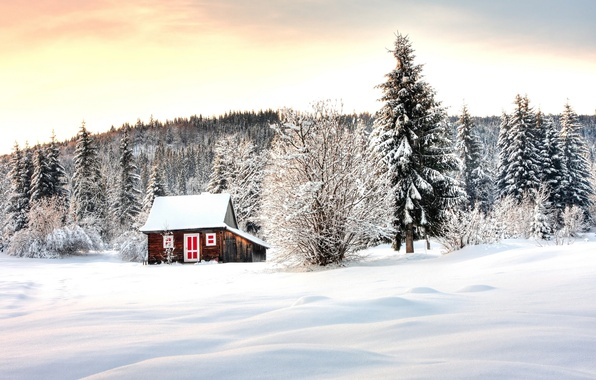Picture winter, forest, snow, trees, house, Winter lodge