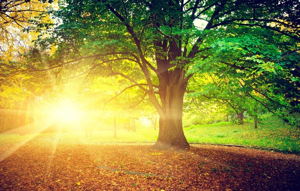 Picture autumn, leaves, the sun, rays, trees, nature, background, tree, widescreen, Wallpaper, day, wallpaper, leaves, bright, …