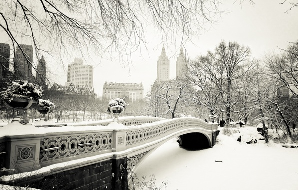 Picture winter, snow, trees, nature, the city, New York, USA, USA, Manhattan, NYC, New York City, …