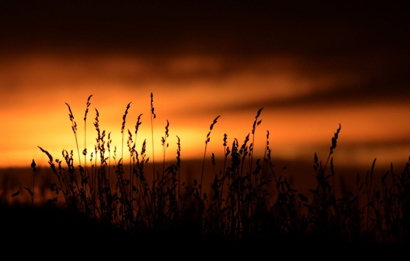 Picture the sky, sunset, nature, background, widescreen, Wallpaper, vegetation, dark, plant, silhouette, wallpaper, widescreen, background, full …