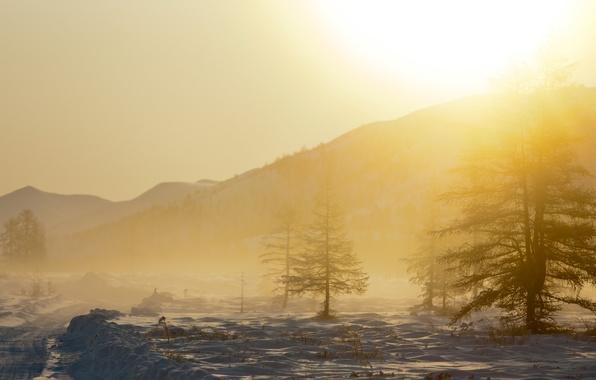 Picture snow, trees, landscape, mountains, nature, fog