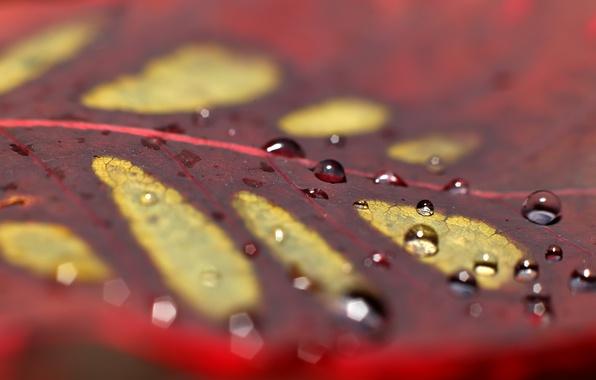 Picture autumn, drops, sheet