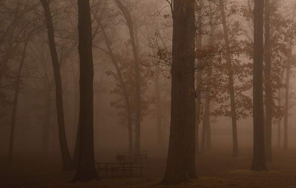 Picture forest, freedom, trees, freshness, fog, darkness, stay, beauty, morning, haze, benches