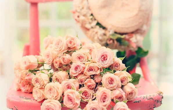 Picture flowers, roses, rose, pink, flowers, roses