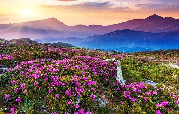 Picture the sky, landscape, mountains, nature, sky, landscape, nature, mountains, sunlight, sunlight, flower field, flower field
