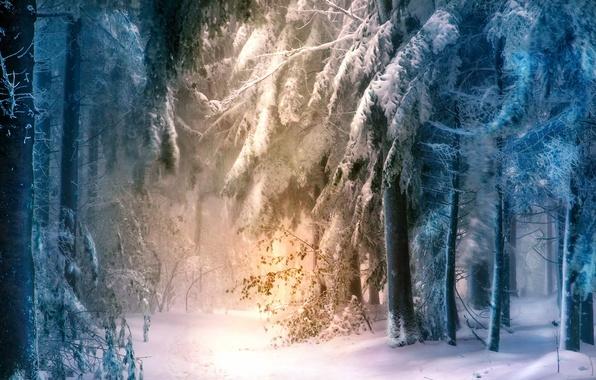 Picture forest, landscape, nature, fog