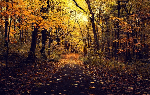 Picture road, autumn, asphalt, leaves, trees, branches, nature, Park, yellow
