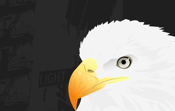 Picture vector, beak, Eagle