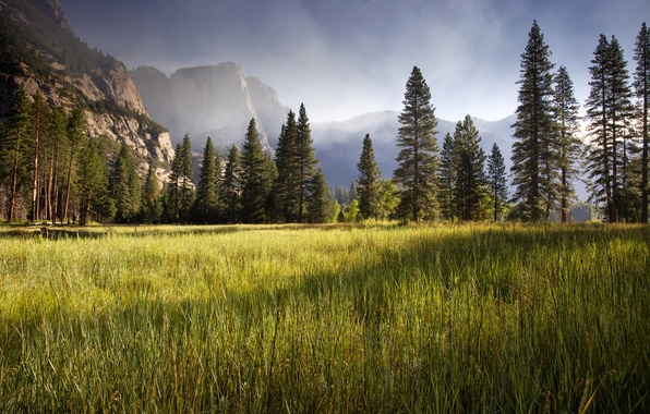 Picture Yosemite Valley, meadow, early morning