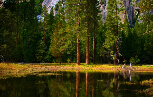 Picture water, trees, nature, reflection, tree, forest