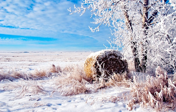 Picture winter, field, nature, blue, tree, rol