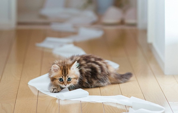 Picture cat, paper, kitty, Board, floor, Daisy, Ben Torode, toilet