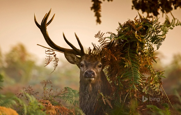 Picture grass, leaves, thickets, England, London, deer, horns, Richmond Park