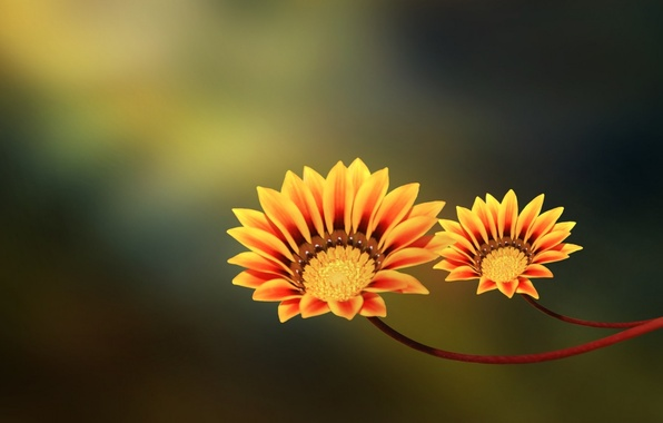 Picture flowers, pair, yellow, orange, two flowers