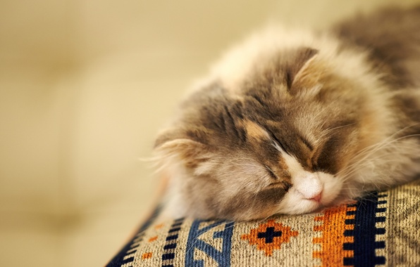 Picture cat, background, sleep, muzzle, sleeping, fluffy