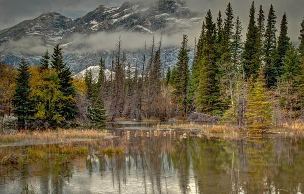 Picture autumn, water, trees, mountains, nature, fog, lake, pond, reflection, spruce