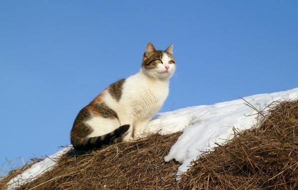 Picture cat, snow, nature