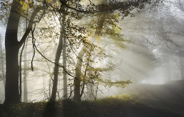 Picture road, autumn, light, nature, fog, morning