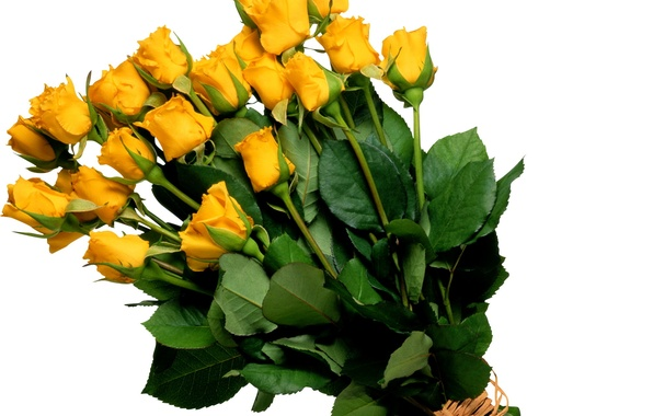 Picture flower, flowers, roses, bouquet, yellow, yellow
