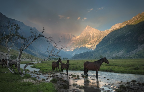 Picture grass, mountains, stream, tree, horses, valley, horse, haze, gorge, drink