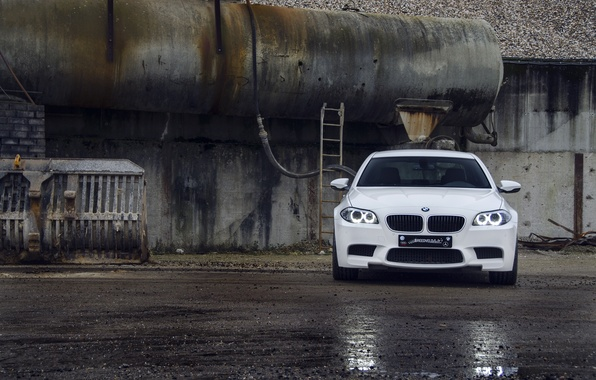 Picture white, asphalt, wet, reflection, BMW, BMW, white, the front, f10