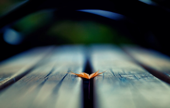 Picture macro, background, tree, widescreen, Wallpaper, blur, leaf, wallpaper, leaf, widescreen, background, full screen, HD wallpapers, ...