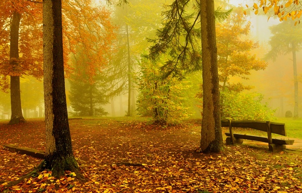 Picture autumn, forest, trees, bench, yellow, gold