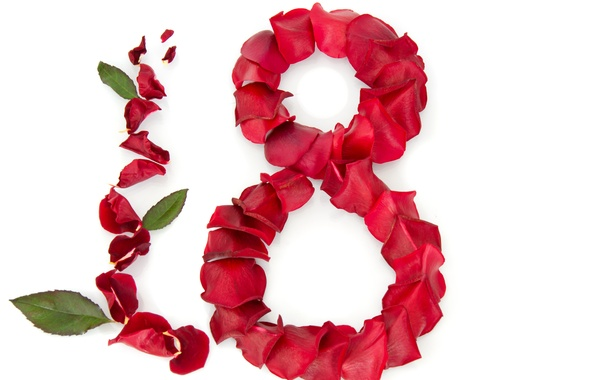 Picture roses, petals, red, white background, leaves, March 8, congratulations, women's day