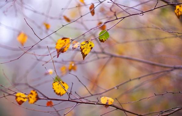 Picture autumn, leaves, branches, branch, dello