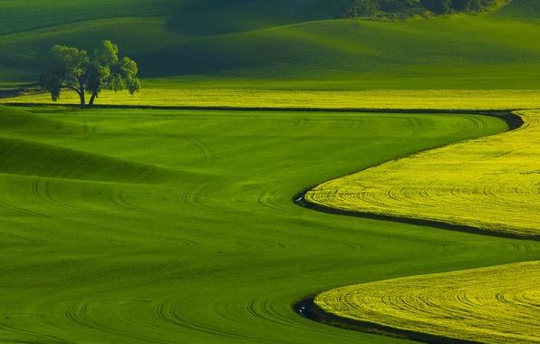 Picture grass, landscape, nature, tree, field