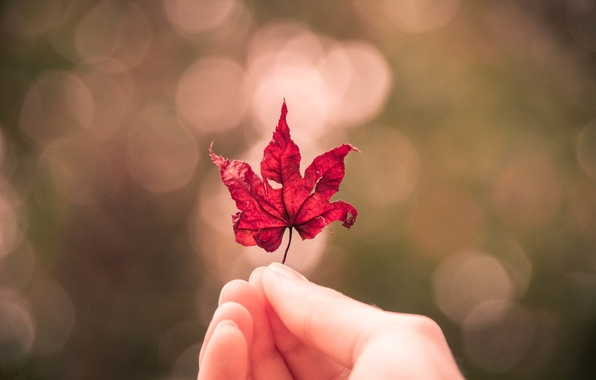Picture autumn, sheet, hand, maple leaf, bokeh